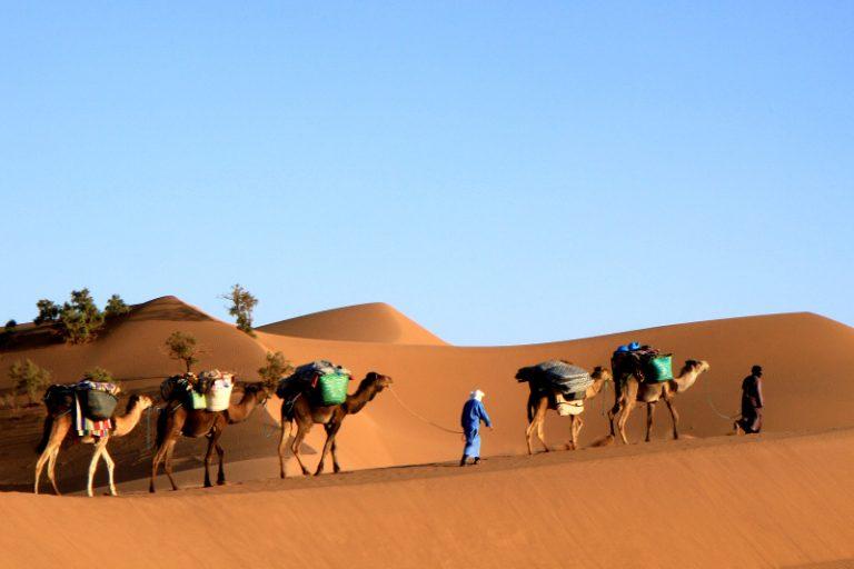 Camel Trekking In Desert Morocco
